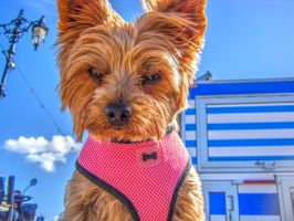 A Dog I met Today by Bazz-photography