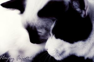Snuggles by photographygrl