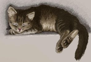 Sleeping kitten by HengenVaarallinen