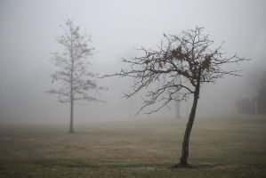 A Tree in Fog by BlackRoomPhoto