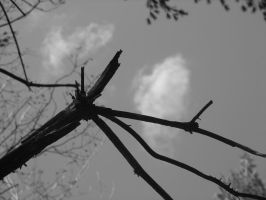 Branch Against The Sky by Kikirini