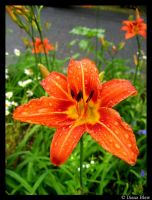 a wet day lilly by ButterflyBlew