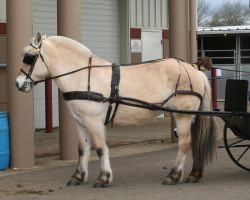 horse 32: in harness by cyborgsuzystock