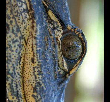 Eye of the Gator by ExquisiteDistraction