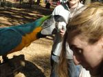 Macaw and I at Ren Fest, EPIC PREEN xD by AkizuRyuuri