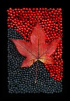 Autumn on Berries on Black by sourcow