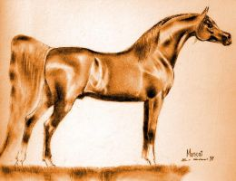 muscat,the great red horse by toratora5