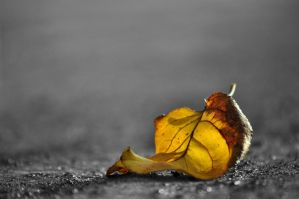 WHAT REMAINS OF GREY AUTUMN... by BlackRugiada