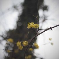 Yellow little flowers by Swaami