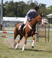 STOCK Showjumping 396 by aussiegal7