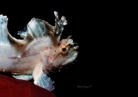 Leaf Scorpionfish by LazyDugong