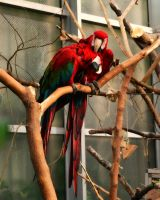 macaws 2 by TiffyLiz