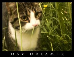 Day Dreamer by Loofen