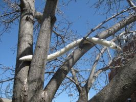 pipe fox on zeh tree by WolfandSquid