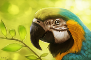 DAY 51. Photo Study - Parrot (30 Minutes) by Cryptid-Creations