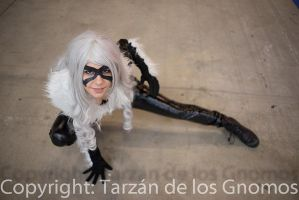 Black Cat / Felicia Hardy Cosplay by LuChocolat