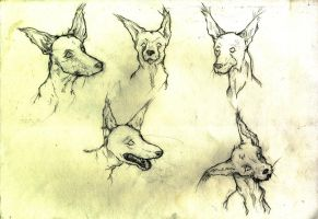 Coyote - Heads by Art-Stew-Frou-Frou