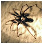 Spider 2 D: by dvk-photography