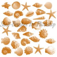 shell-brushes by aswad-hajja