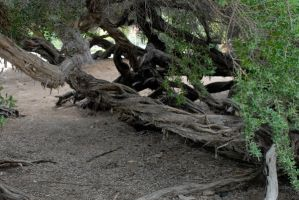 Twisted Trees 03 by LinzStock