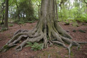 Tree roots by rainbowphotos