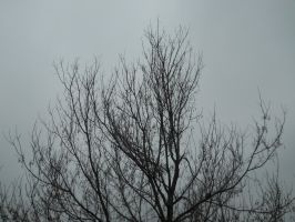Bare Branches Stock 3 by Orangen-Stock