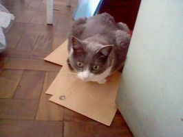 My Cat, lying in important documents by MeSadChild