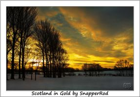 Scotland in Gold by SnapperRod
