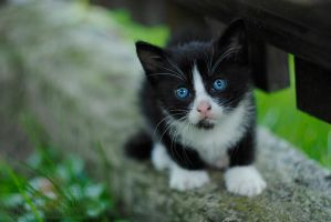 Blue eyes by Drocco