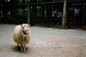 Ironic Sheep by TheBlairMan