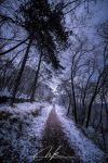 Snowy forest path II by Koljan