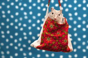 A Gerbil's Bag by ErikTjernlund