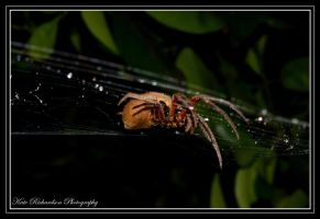 The spiders trampoline by Purple-Dragonfly-Art