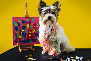 My Dog, The Artist by CharliesBrightEyes