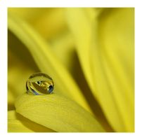 Yellow droplet by Katosu