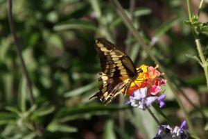 Desert Canyon Butterfly by olearysfunphotos