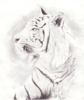 White Tiger by Skissored