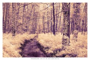 The enchanted woods of Heviz by DimensionSeven
