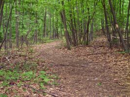 Path Through Woods by Retoucher07030