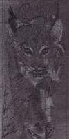 Bobcat (Charcoal) by ZkullDefence