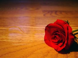 Rose on the floor in water 3 by estesgraphics