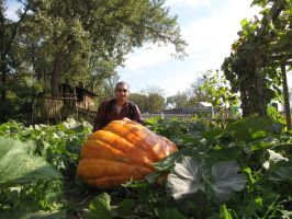 The largest pumpkins by Faunamelitensis