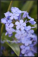 The Blues by SassyPants61762