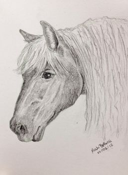 Horse Draw by MaJuSaBe