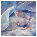 Dreaming - Fancy rats by DianePhotos