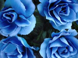 Blue Silk Roses by Voyager1989