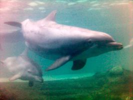 Low-Res Dolphin:Reference Only by Della-Stock