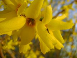 Forsythia and Friend by NetherStray