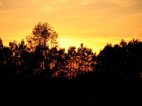 Gold and Silhouettes by SybilThorn