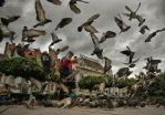 Man with pigeons by adypetrisor